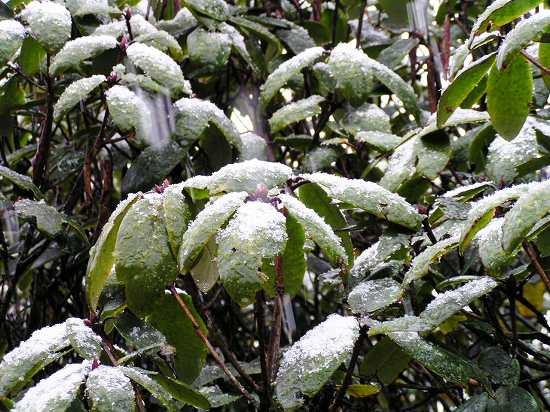 PA250946 新雪.jpg