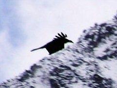 PA261069-2 鳥.jpg